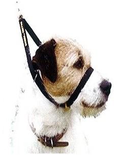 canny-collar-para-perro