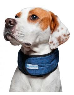 collar refrescante perro