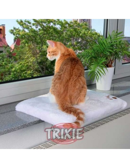 plataforma ventana gato